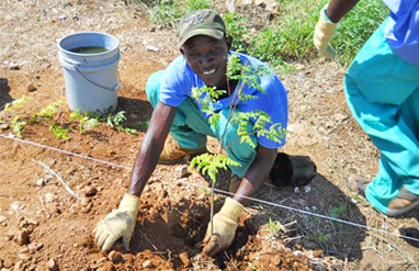 Planting crops in Miracle Village - our village of new homes for Haitians built following the Earthquake.