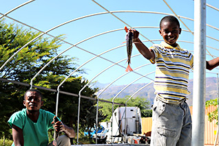 Another sustainability project - Love A Child's Tilapia Fish Farm in Haiti