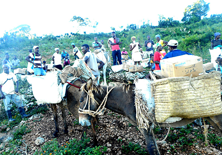 Loading up donkeys to carry food and supplies up the mountain of Peyi Pouri