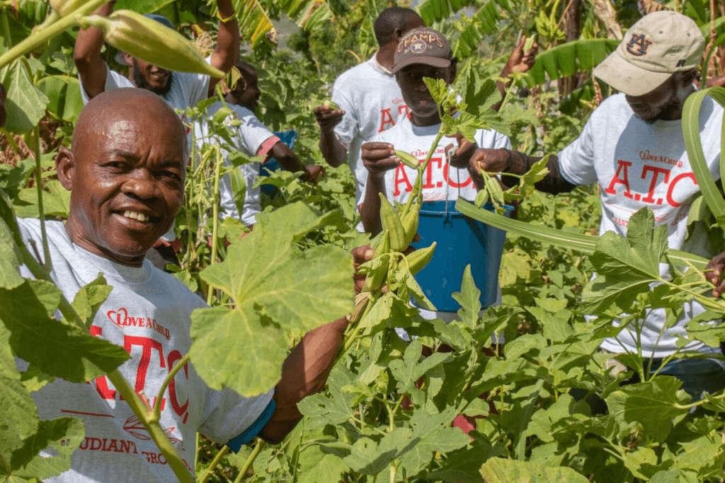 Harvesting Okra at the Agricultural Training Center Gardens - Sustainability - Haiti
